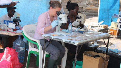 Fiona Allan (centre) checking schistosome egg hatching in Uganda