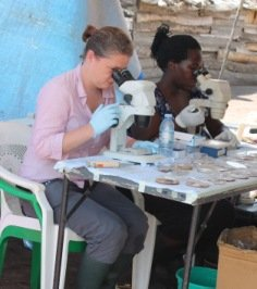 NHMs Fiona Allan (left) checking schistosome egg hatching in Uganda
