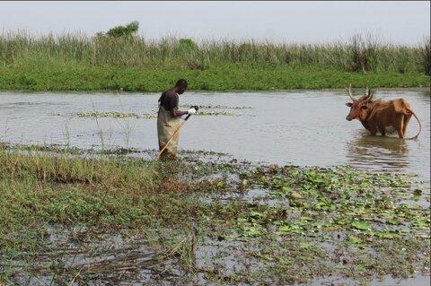 Alassane Ndiaye being scrutinized while surveying freshwater snails. Credit Elsa Léger.