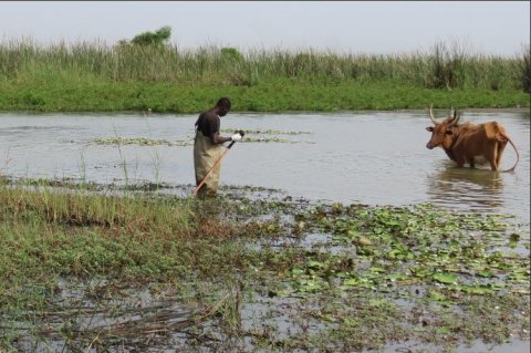 Alassane Ndiaye being scrutinized while surveying freshwater snails. Credit Elsa Léger.