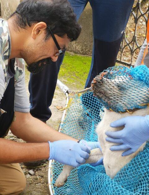Sreejith Radhakrishnan collecting a blood sample from a free-ranging / stray dog in Kerala. Image courtesy S. Radhakrishnan