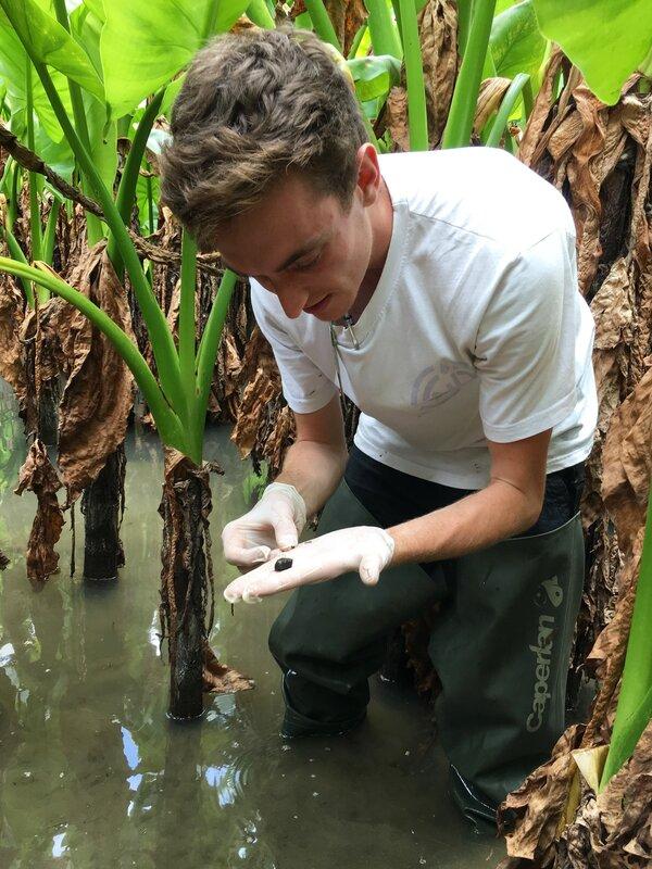 Searching for Bulinus species snails, potential intermediate hosts of S. haematobium.